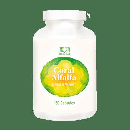 Coral Alfalfa Alfalfa lucerna c