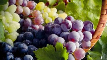 Polifenole i antocyjany – o prozdrowotych właściwościach winogron