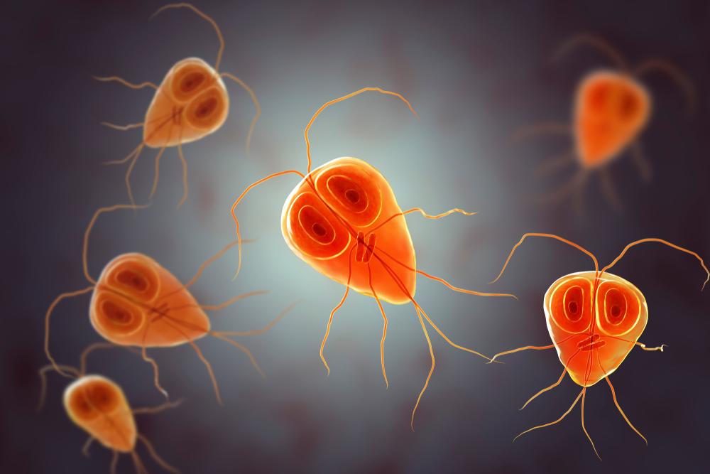 Lamblioza – kto jest narażony i jak przebiega leczenie