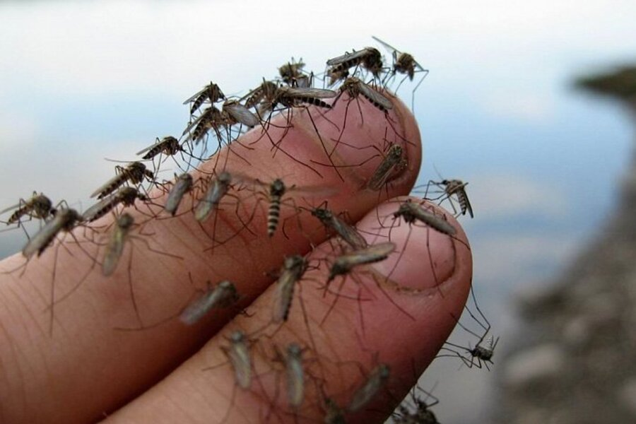 Ochrona przed komarami – przedstawiamy najskuteczniejsze sposoby